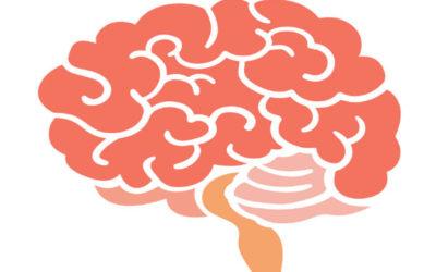Reflections from a Neuroscience Mumma