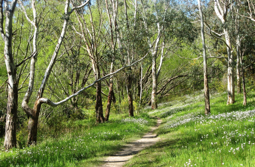 brownhill creek conservation park