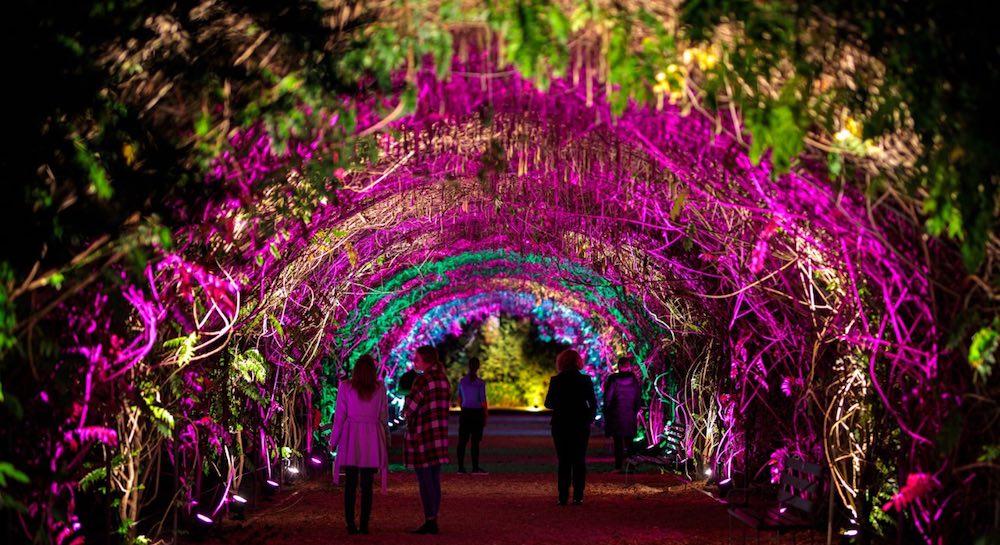 botanica lumina