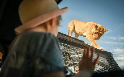 WIN: A FAMILY PASS to the Lion 360 Experience at Monarto Safari Park