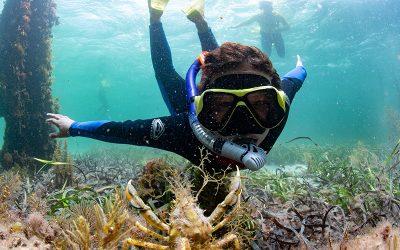 Top 10 Snorkel Spots in SA