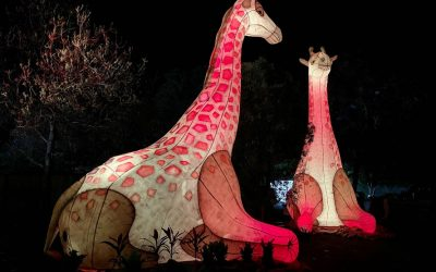 REVIEW: LIGHT CREATURES AT ADELAIDE ZOO