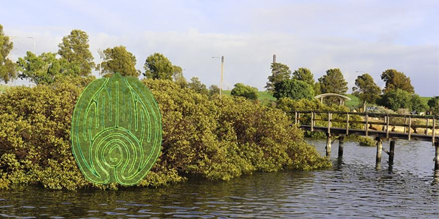 nature festival mangrove walk